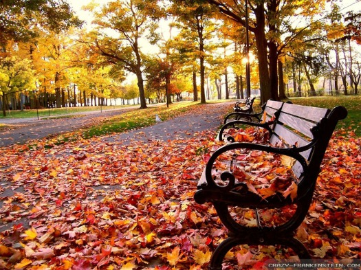 635770247153771019-1730449995_fall-leaves-in-park-wallpapers-1024x768