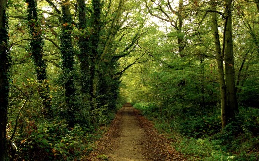 Nature_Forest_Path_in_the_green_forest_035974_